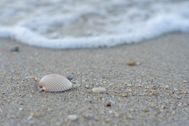 Морские раковины на песке