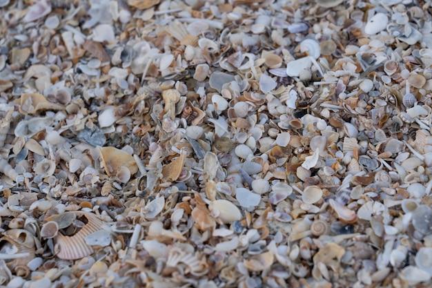 Морские раковины на песке на пляже