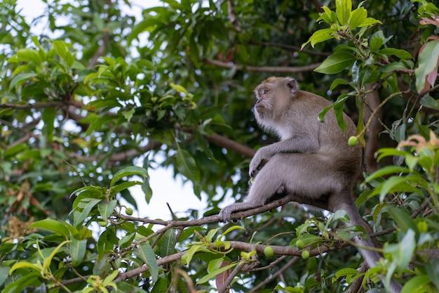 モンクは木の上で何か食べるものを見つける