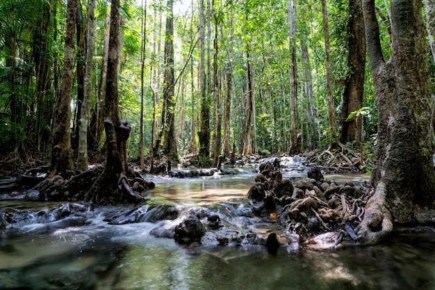 Река глубоко в горном лесу. природная композиция