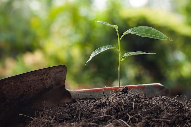 シャベルと茶色の土壌で成長する若い植物