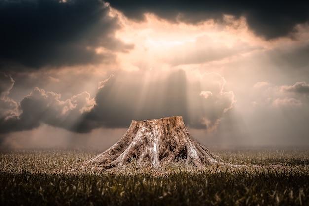太陽光のバックグラウンドを伴う森林破壊に起因する塊