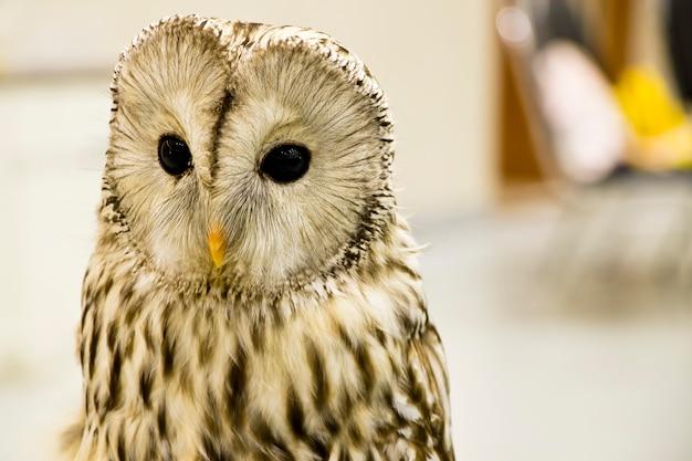 甘いフクロウは目玉で毛皮がかっこいいのでかわいいです。