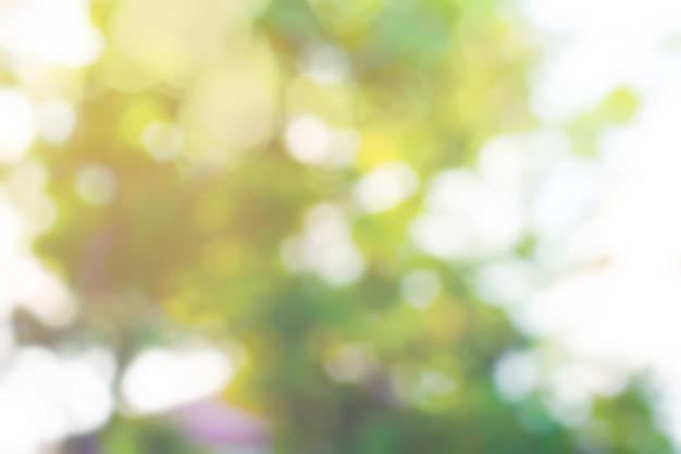 抽象的なボケの葉と照明キラキラの背景。