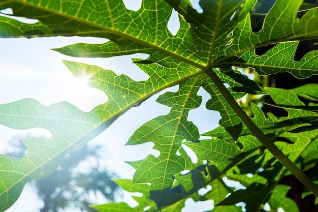 Листья и освещение блеском фона