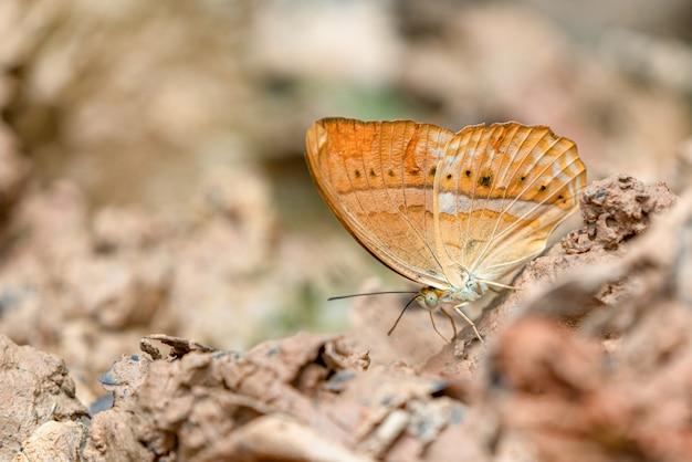 美しい蝶。ミネラルを食べに来てください。蝶の羽の美しいパターン。