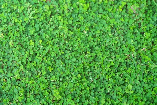 緑の植物の背景と自然の壁紙のテクスチャ。