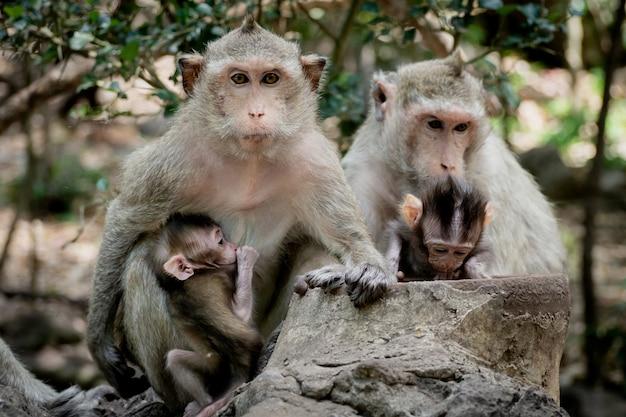母親の保護の下で赤ちゃん猿。シャギーなオレンジ色の毛皮と人間のような表現を持つサル家族