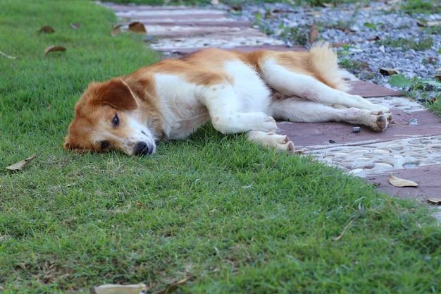 道端犬の芝生