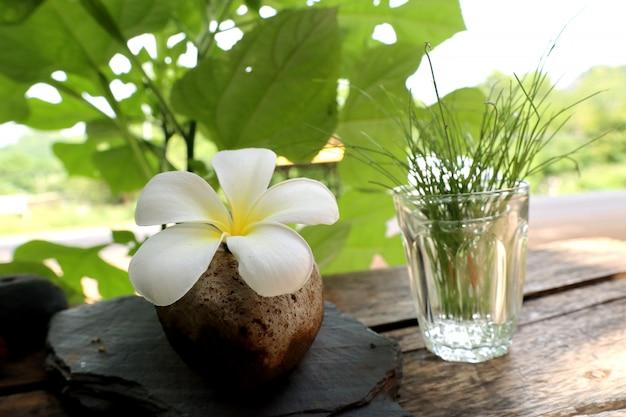 熱帯の花白プルメリア