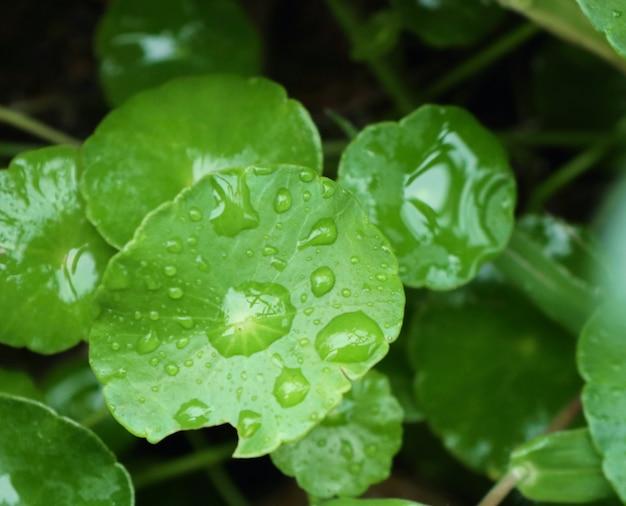 水滴とアジアの葉