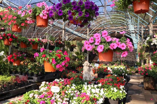 Петуния цветы на продажу