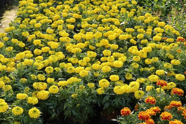Магазин цветов на продажу