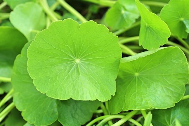 自然の中でアジアの葉