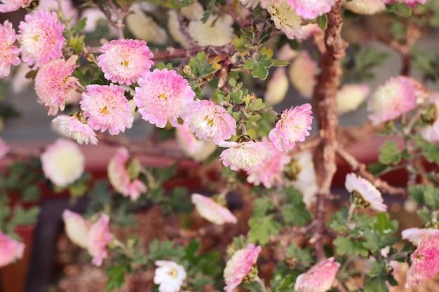 通り韓国のピンクの花