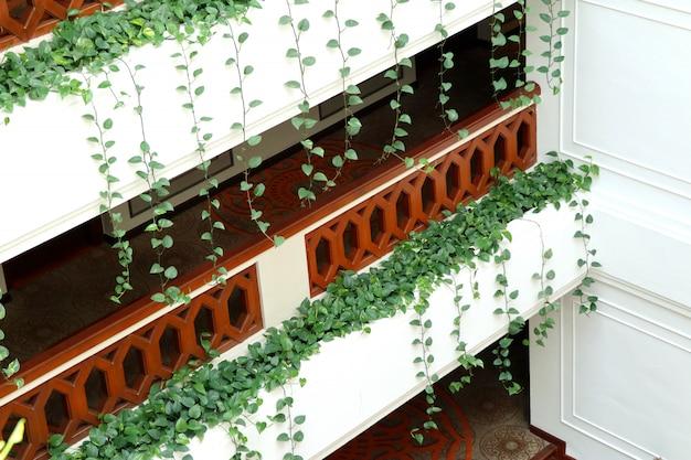 ホテルを飾るツタの葉