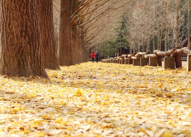 韓国のイチョウの木