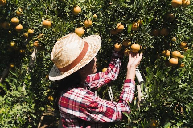 フィールドで働く若い女性農家。女性庭師は農場で新鮮なオレンジを収穫しました。