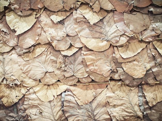 乾燥葉(チークの葉)壁の背景とテクスチャ。