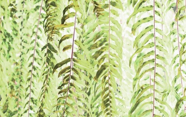 美しい緑のシダの葉アートは背景の抽象的なイメージに使用します。
