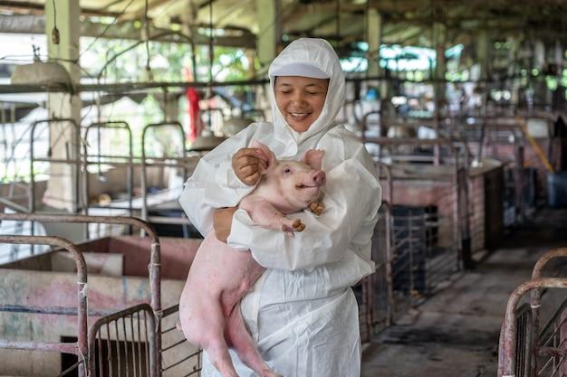 Азиатский ветеринар, работающий и проверяющий здоровье молодых свиней в свинофермах