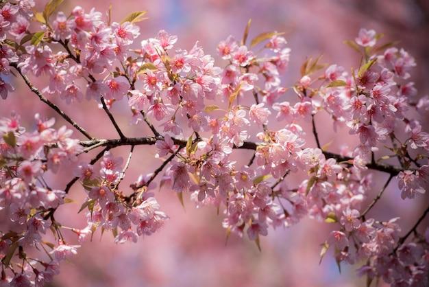 桜の花の枝が綺麗です。