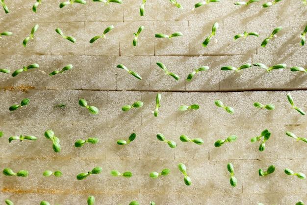 Вид сверху детские гидропоники овощи, растущие на воде