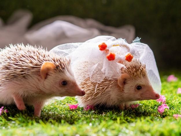 かわいいハリネズミの結婚