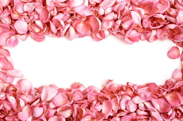 Лепестки розовых роз на белом фоне