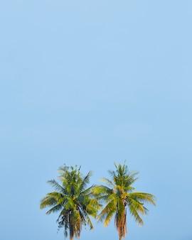 Яркое небо с кокосовой пальмой для