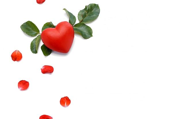 白地に美しい赤いバラ