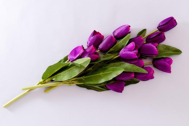 紫チューリップの花春の背景