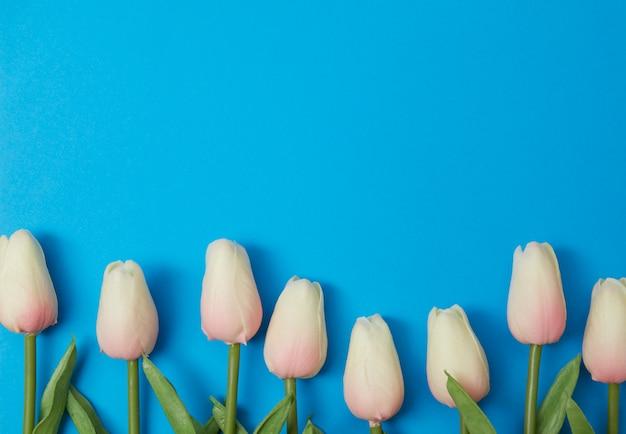 青い背景にピンクのチューリップの花