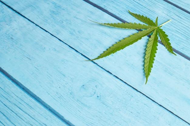 明るい青い木の大麻葉