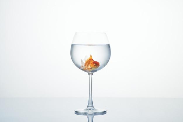 白のワイングラスに浮かぶ金魚