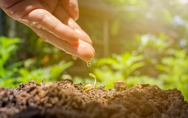 水滴反射のある人間の手は、トロピカルガーデンのある地面にある実生植物とカタツムリに滴る