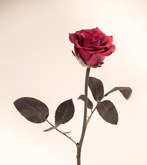 Цветочный дизайн черный винтаж красивые цветы, сделанные с цветными фильтрами
