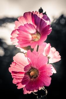 花ヴィンテージ調色デザインの背景
