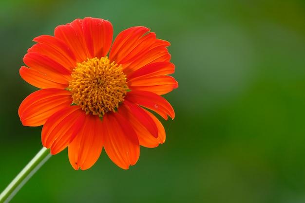 オレンジ色の花の色と詳細