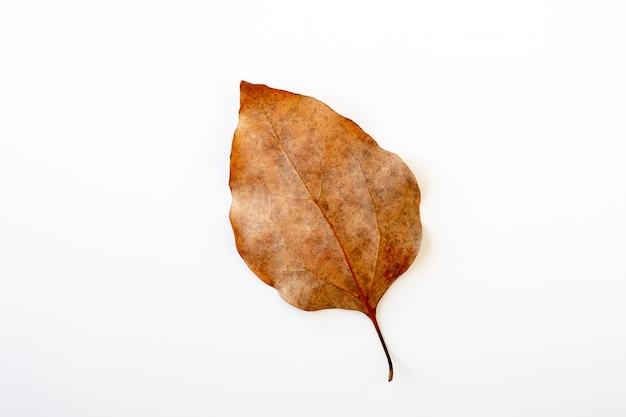 分離された茶色の葉