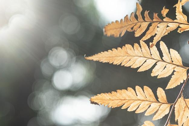 自然な背景に茶色の葉のクローズアップ