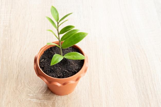 茶色の鍋に小さな植物