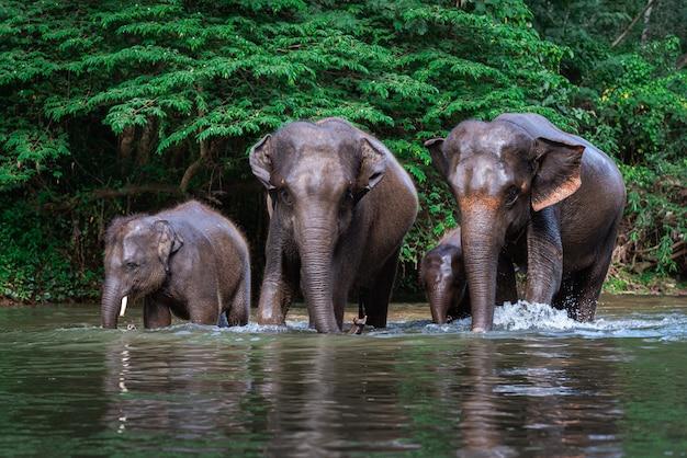水の中の象の家族