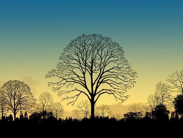 夕日の木のシルエットと美しい風景の画像