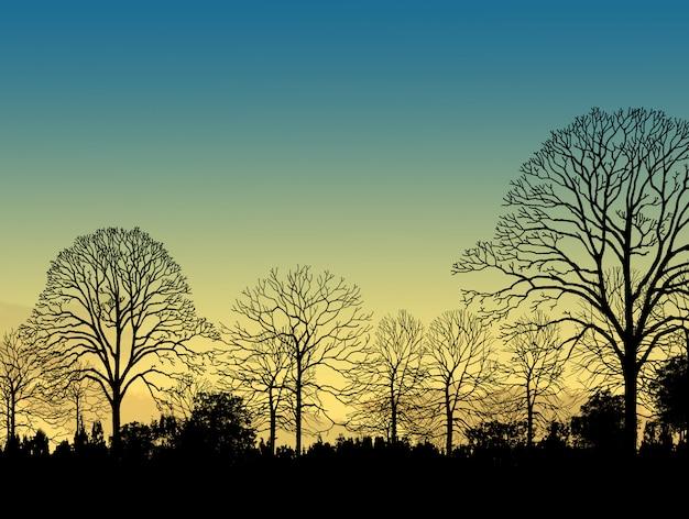 Красивое изображение ландшафта с силуэтом деревьев на закате