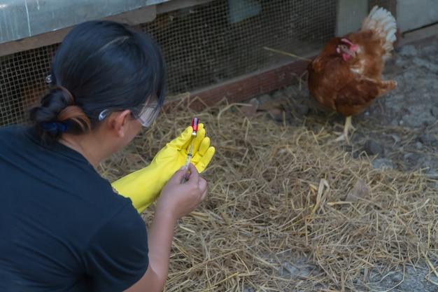 養鶏場の横に座って注射針を保持している女性農家。彼女は、ニューカッスルと伝染性気管支炎ワクチンの注射の準備をしています。動物の伝染病の予防
