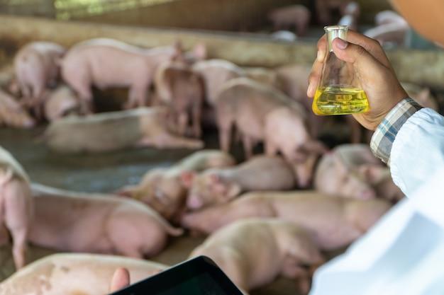 獣医師の背面図は、養豚場で口蹄疫をチェックするために防護服を着用し、三角フラスコを保持しています。