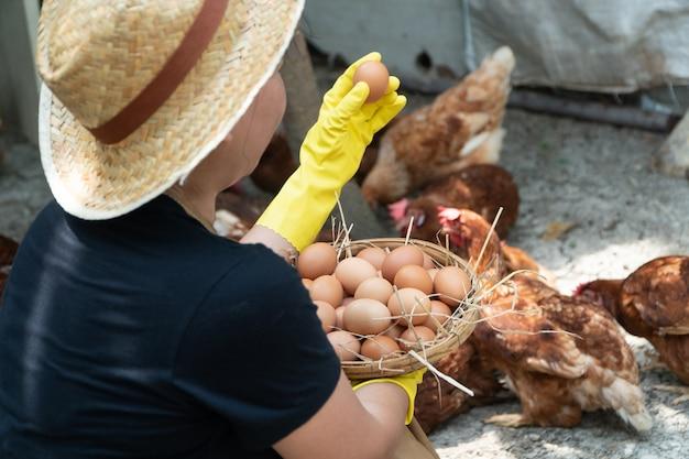 農民の女性は黒いシャツを着て新鮮な鶏の卵を集めています