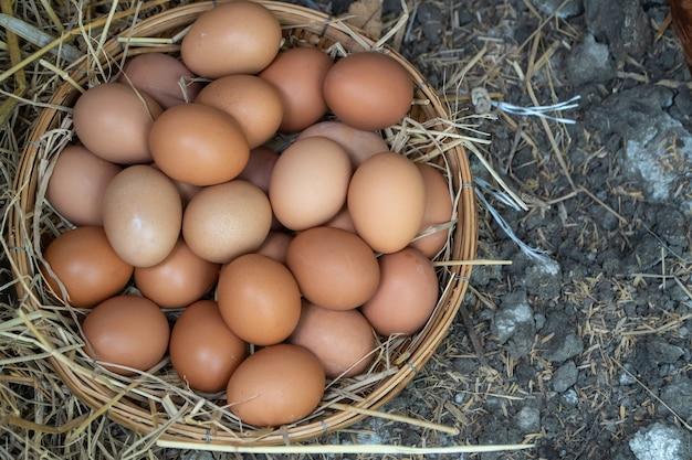 Свежие куриные яйца в корзине на земле после того, как фермеры собирают яйца с фермы