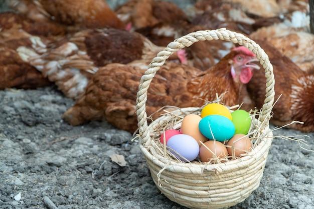 Красочные куриные яйца в корзине на земле рядом с куриной группой